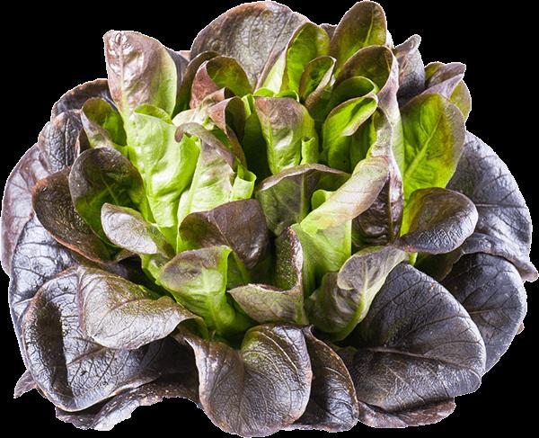 Salade « les feuilles de rêve »